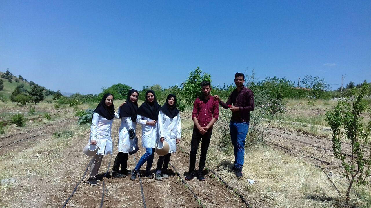 طرح کاشت محصولات صیفی و سبزیجات بصورت تلفیقی در باغ گیاه شناسی دانشگاه ایلام انجام شد